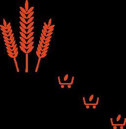 distillation d'un whisky bio : choix de céréales biologiques made in france